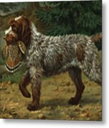 A Wire-haired Pointing Griffon Holds Metal Print