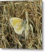 A Yellow Moth  Metal Print