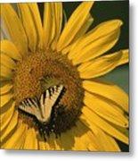 A Yellow Swallowtail Metal Print