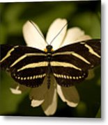A Zebra-winged Butterfly At The Lincoln Metal Print by Joel Sartore