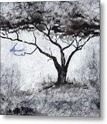 Acasia Tree Metal Print
