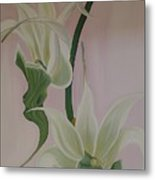 Aeranthes Peyrot Orchide Metal Print