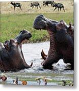 African Wildlife Montage - Hippos Metal Print
