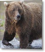 Alaska Brown Bear Upclose Metal Print