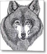 Alaskan Husky Metal Print