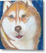 Alek The Siberian Husky Metal Print