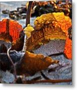 Algae At Low Tide Metal Print by Heiko Koehrer-Wagner
