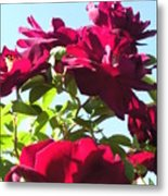 All About Roses And Blue Skies IIi Metal Print