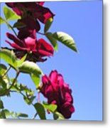 All About Roses And Blue Skies Vii Metal Print