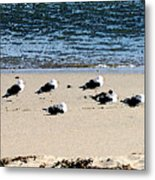 All My Gulls In A Row Metal Print