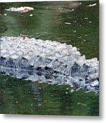 Alligator Crawl Metal Print