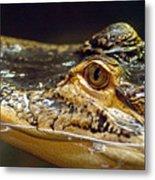 Alligator Eye Close Up Metal Print