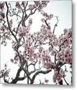 Almond Tree In Flower Metal Print