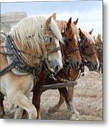 American Work Horse Metal Print