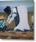 Amish Picking Peas Metal Print by Francine Frank