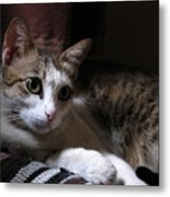 Ammani The Cat Metal Print