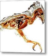 Anatomical Plastination Specimen Of A Honey Buzzard Metal Print