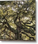 Angel Oak Tree Live Oak  Metal Print