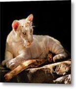 Animal - Cat - A Baby Snow Tiger Metal Print