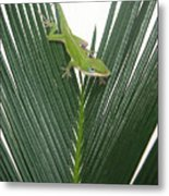 Anole With Palm - Assertive Metal Print