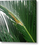 Anole With Palm - Inquisitive Metal Print