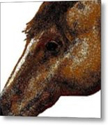 Appaloosa Eye Metal Print