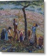 Apple Harvesting Metal Print