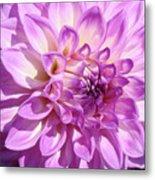 Art Prints Dahlia Flower Decorative Art Garden Baslee Metal Print