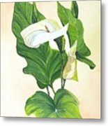 Arums Metal Print