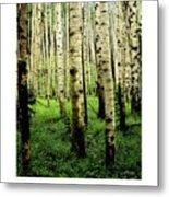 Aspen Grove Flagstaff Arizona Metal Print