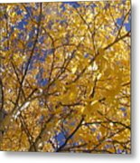 Aspen Leaves Metal Print