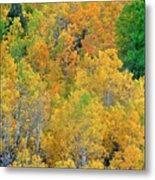 Aspens In Fall Eastern Sierras California Metal Print