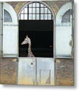 Asymmetrical Giraffe  Metal Print
