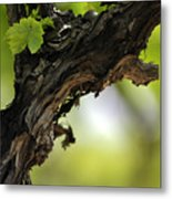 At Lachish Vineyard Metal Print