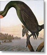 Audubon: Cormorant Metal Print