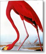 Audubon: Flamingo, 1827 Metal Print