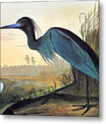 Audubon: Little Blue Heron Metal Print by Granger