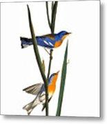 Audubon: Warbler, 1827 Metal Print