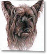Australian Terrier Metal Print