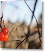 Automn Fruits Metal Print