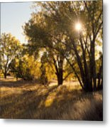 Autum Sunburst Metal Print