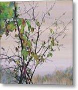 Autumn Birch By Sand Creek Metal Print by Carolyn Doe