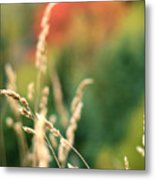 Autumn Bokeh Metal Print