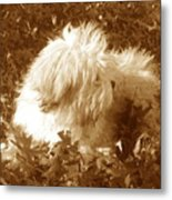 Autumn Breeze 2 Metal Print