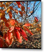Autumn Colors 06 Metal Print