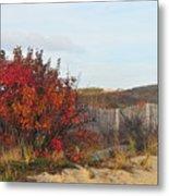 Autumn In The Dunes Metal Print