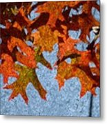 Autumn Leaves 20 Metal Print