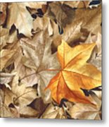 Autumn Leaves Series 2 Metal Print