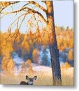 Autumn Light ... Montana Art Photo Metal Print