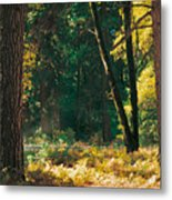 Autumn Morning Yosemite National Park Metal Print